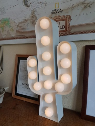 Koningsdag Arnhem cactus met lampjes