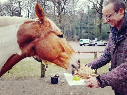 Taart voor paard