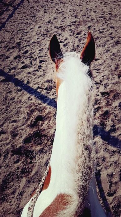 dressuur met bont paard