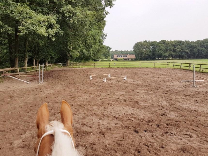 springen bont paard