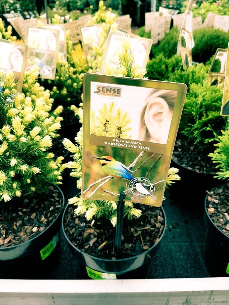 rainbow plant intratuin Duiven