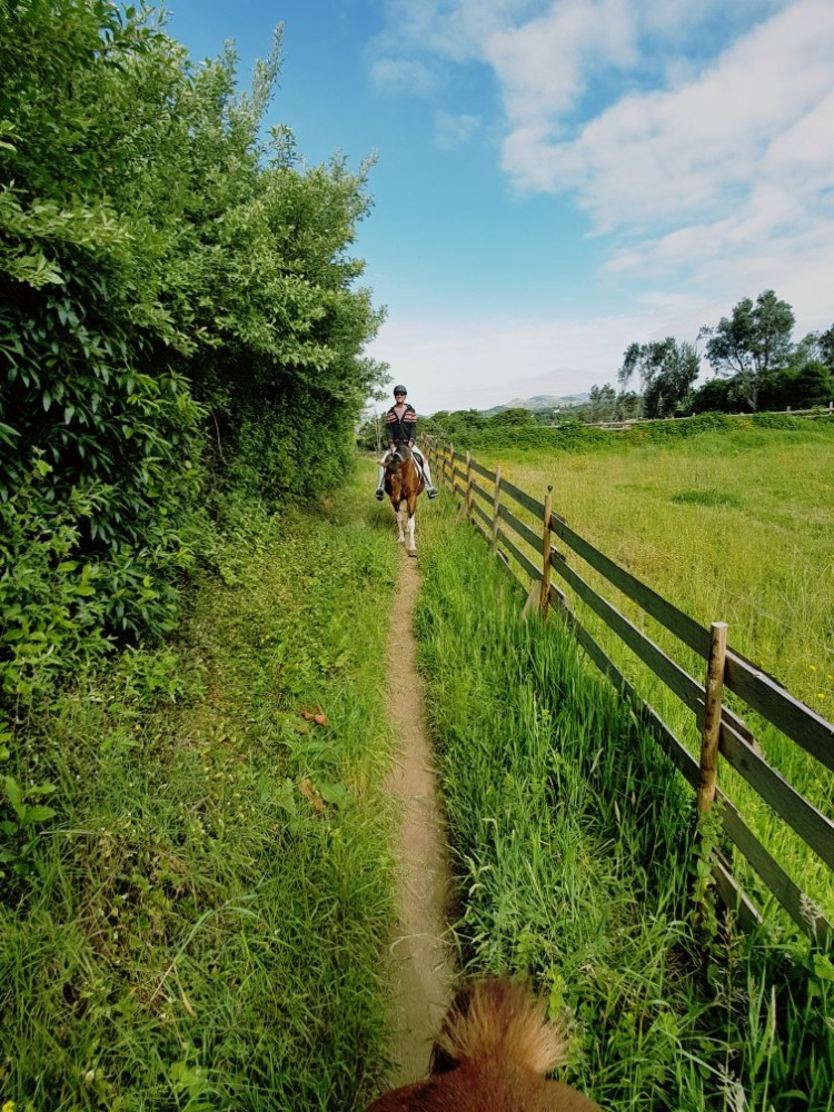 Sao Miguel Azoren Portugal Paardrijden
