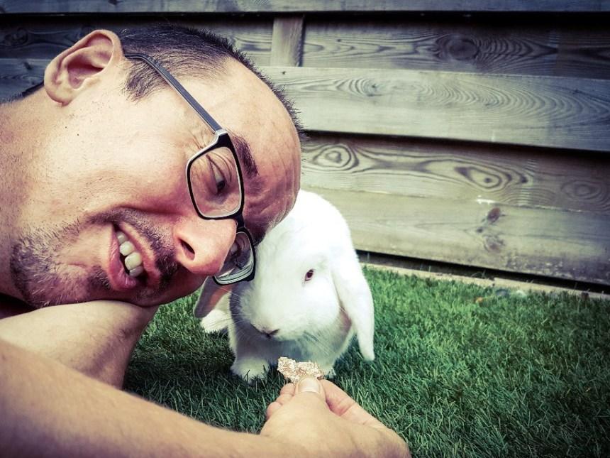 Albino konijn