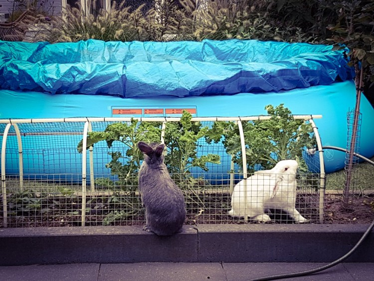 konijnen eten boerenkool