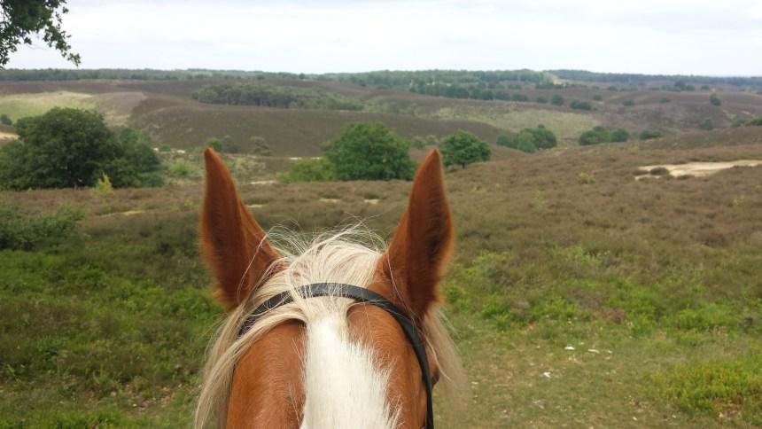 De Posbank Gelderland paardrijden bonte pony