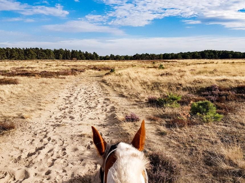 Nationaal park de hoge veluwe te paard