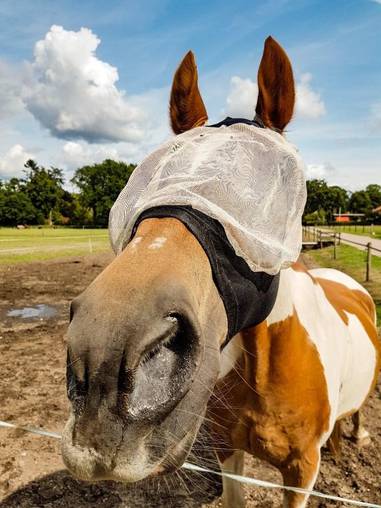 vliegenmasker pony stretch