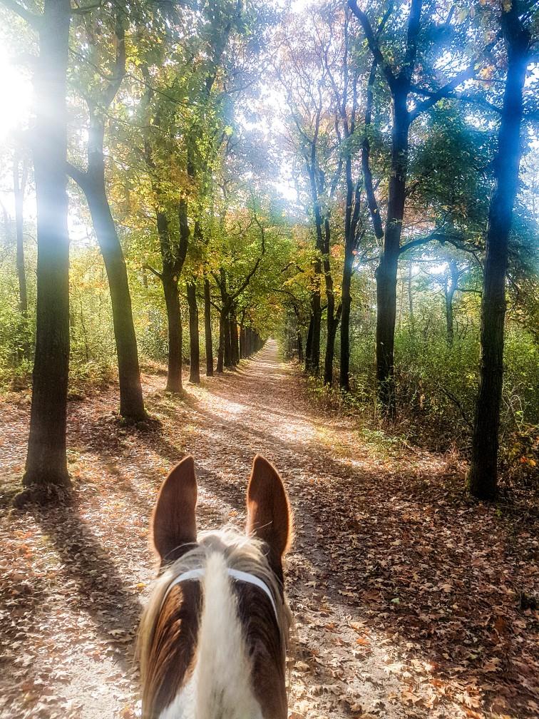 Herfst bonte pony bosrit Arnhem Schaarsbergen