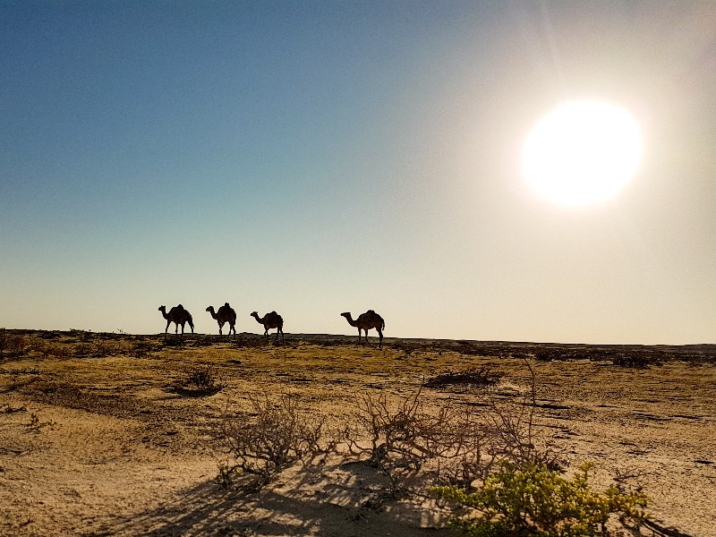empty quarter wahiba sands Oman kamperen
