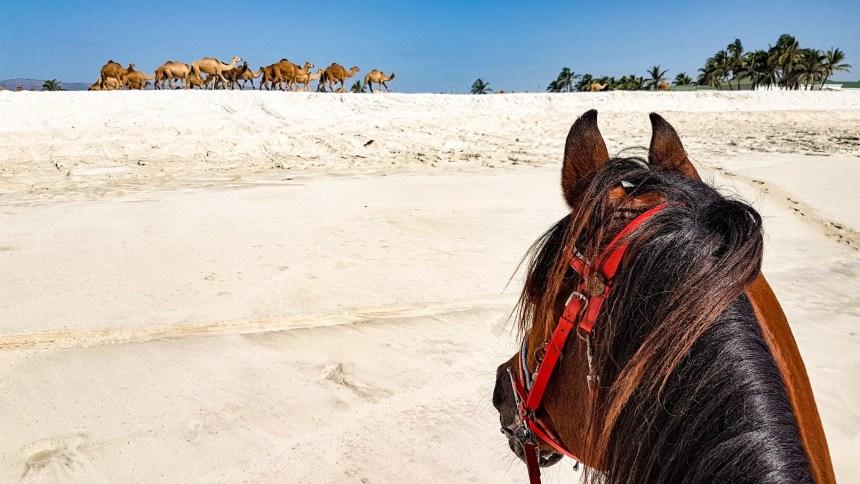 Paardrijden Dhofar regio Oman