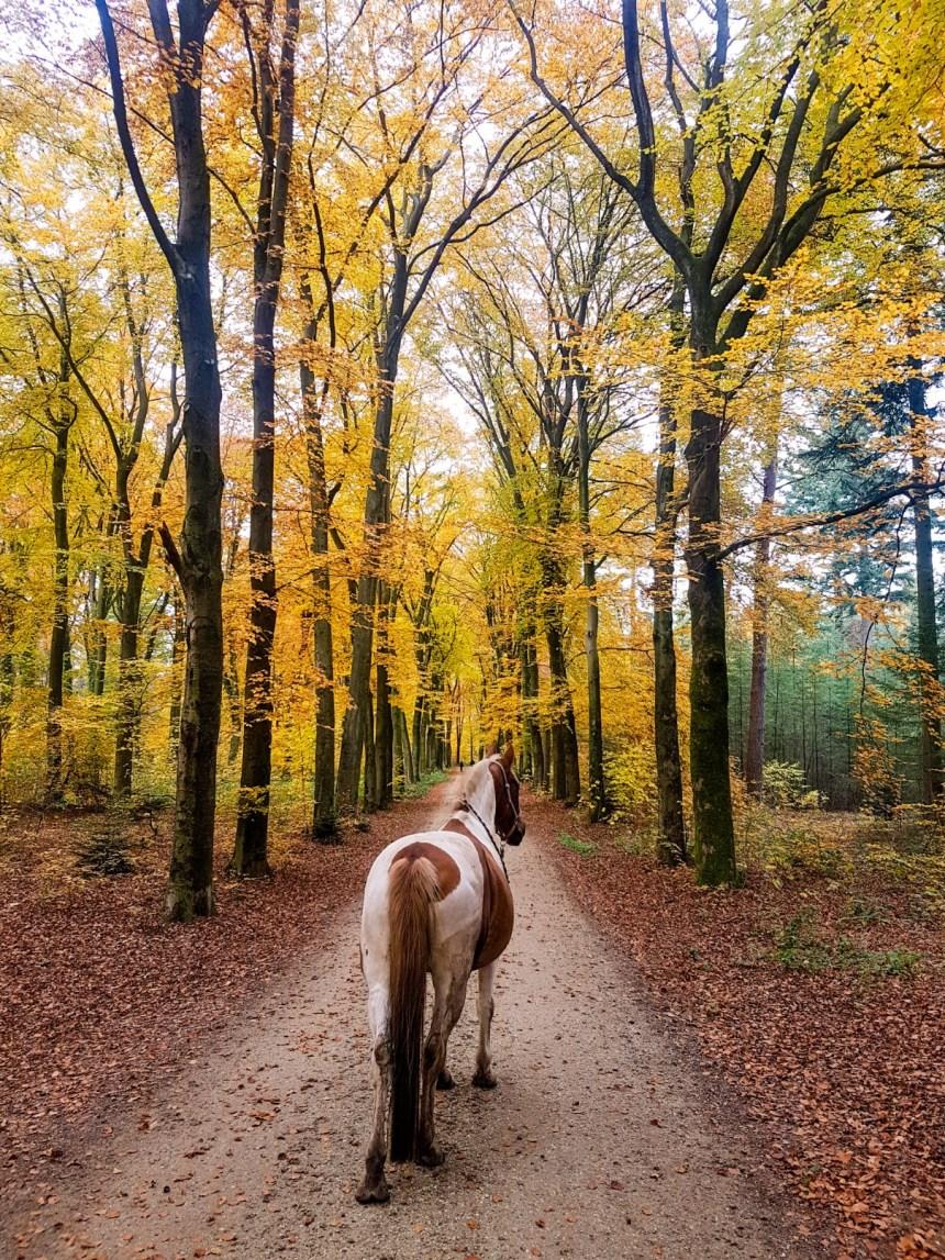 Bonte pony Warnsborn Herfstkleuren