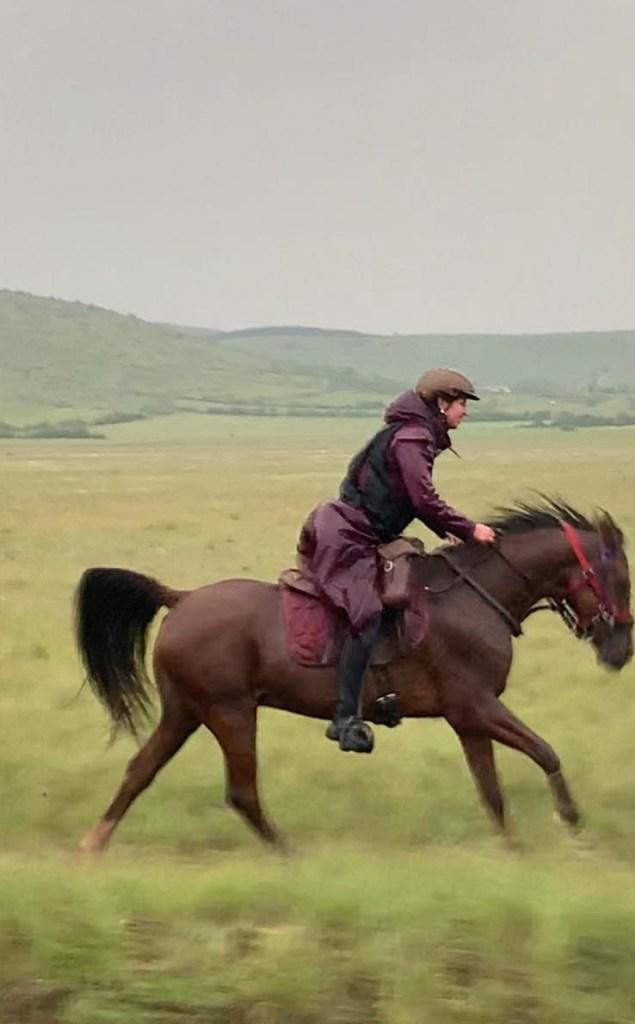 Sommant horse team arabieren Frankrijk
