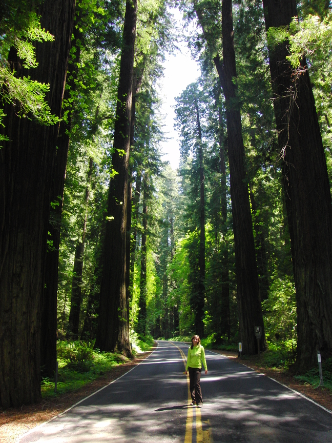 Avenue of the Giants USA