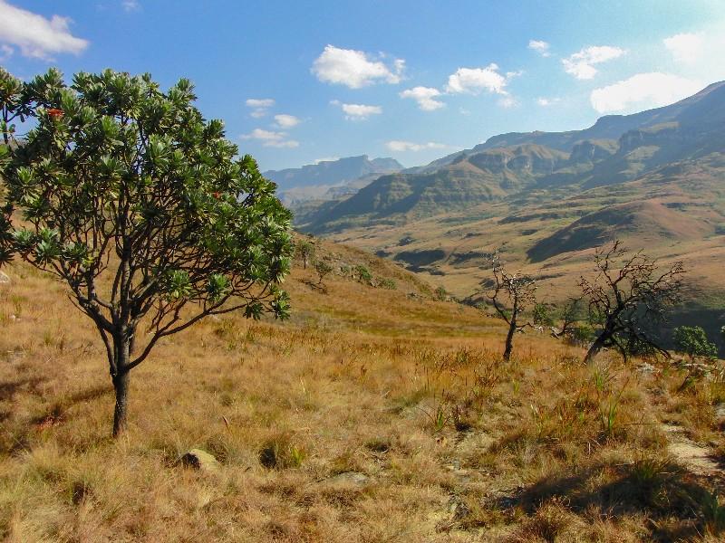 7 routes die je in Zuid Afrika gereden moet hebben