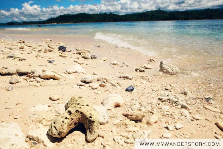 MWS - San victor island shells
