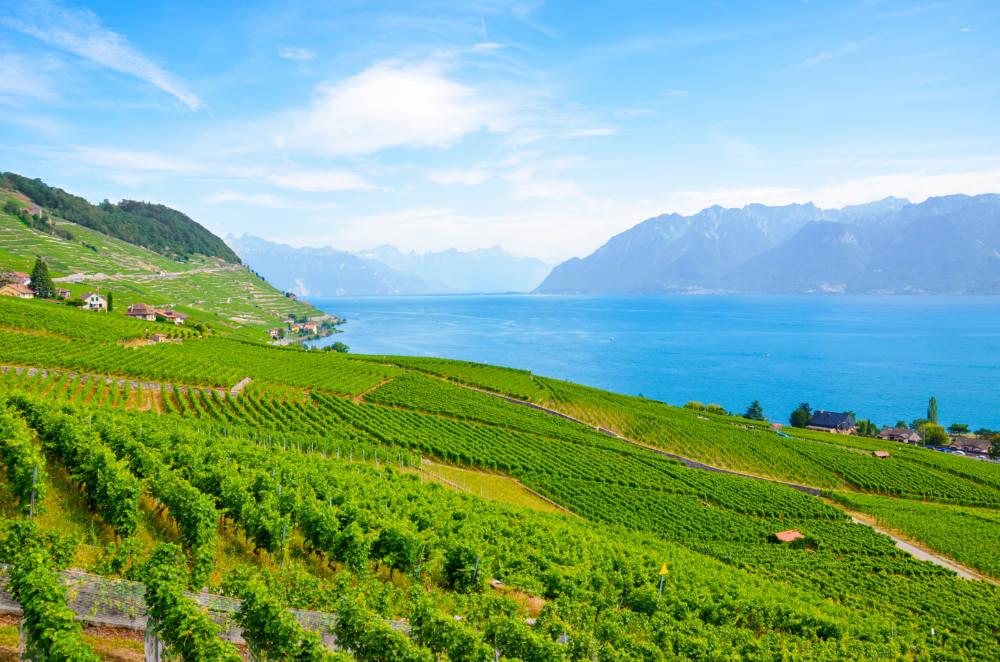 Lavaux – nejkrásnější vinice Evropy jsme našli ve Švýcarsku
