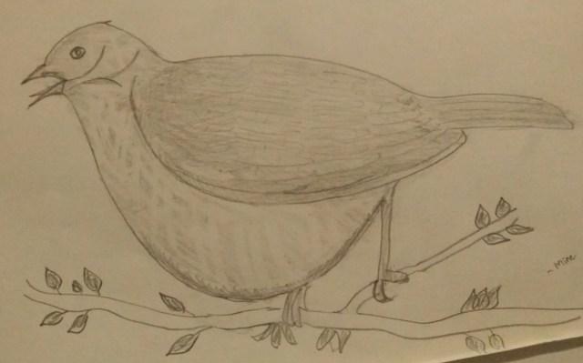 Bulgy Sparrow!
