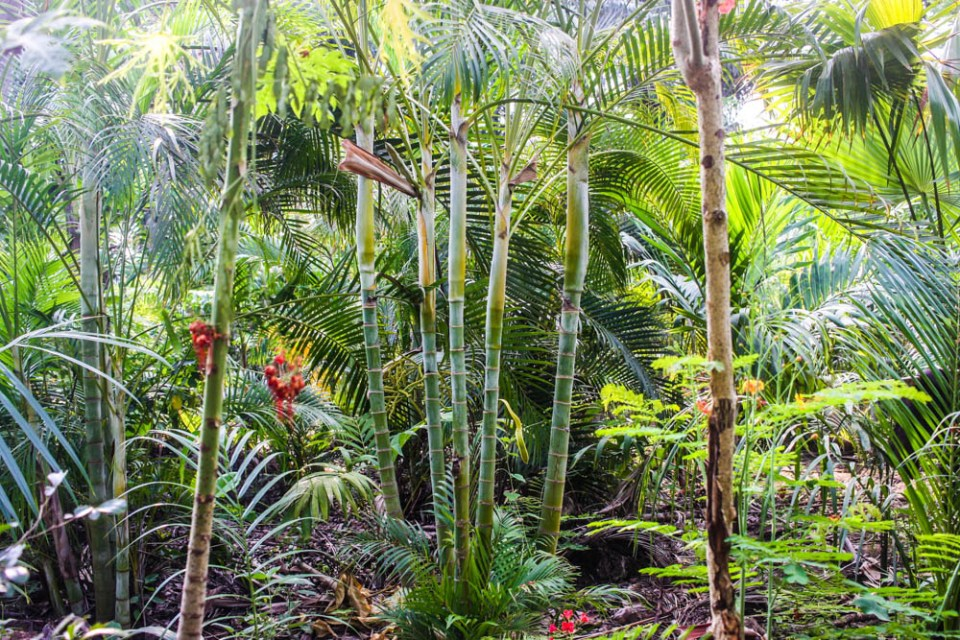 Diary of MyWeku Restaurant: Ordering a shade tree and two palm trees