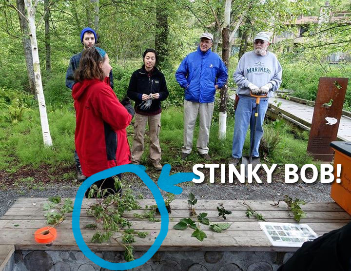 WHAM Spring Cleanup 2015 - Weed Orientation Featuring Stinky Bob