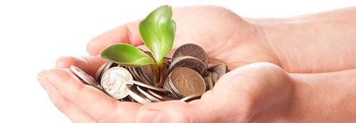 money seeds