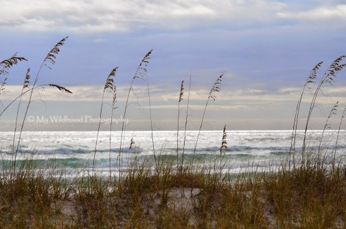 Dun Grass, Destin, Florida