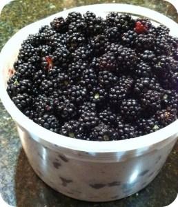 blackberries in bucket 2