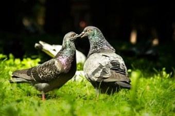 fidelity doves