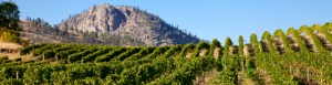 OFWA vineyards