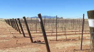Sonoita Vineyards vineyards