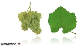 Alvarinho grape