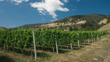 Tinhorn Creek Vineyard