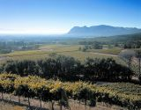 Vineyards around Constantia (Image courtesy Wines of South Africa)