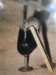 Sherry drinking mouse at Tio Pepe (Image couresy www.atlasobscura.com)
