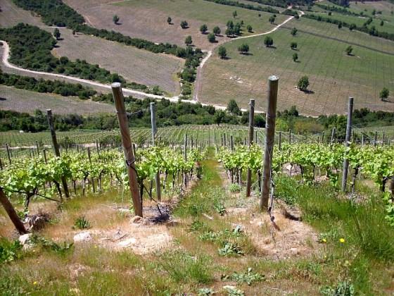 Viña Montes Apalta vineyard is very steep
