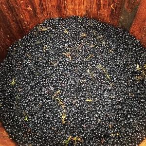 Domaine Roux Bourgogne Pinot Noir