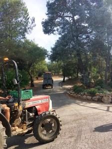 Figuiere Tracteurs Dans Les Allees De Pins - Provence