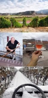 BC Harvest 2020 mosaic