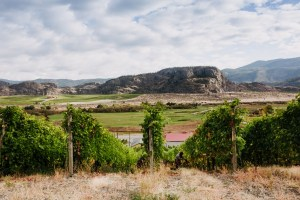 Gold Hill Winery Syrah block Fall Harvest 2020