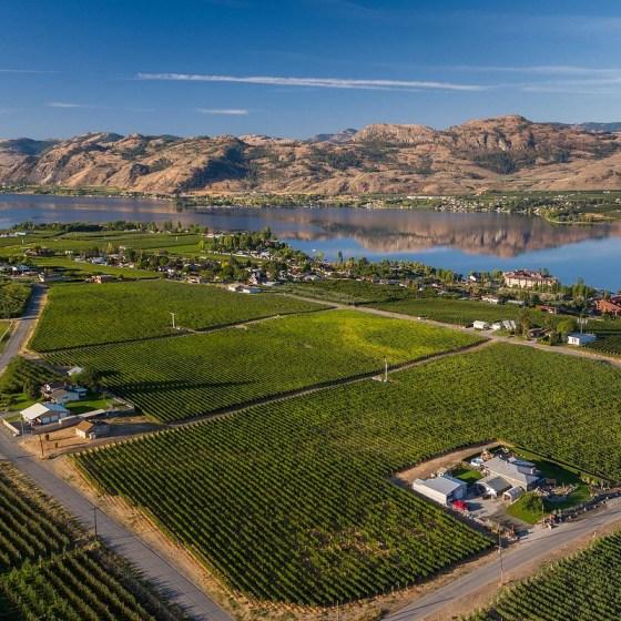 Haynes Creek Vineyard (Image courtesy of Cedar Creek Estate Winery)