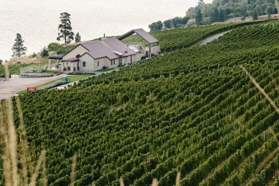 Fitzpatrick Family Vineyards (Okanagan photographer - jonadrian.com)