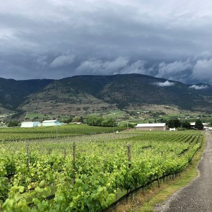 Nostalgia Home Vineyard (credit Nostalgia Wines Inc)