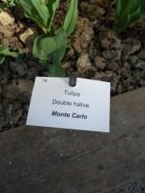 Tulipe-Mania (156)