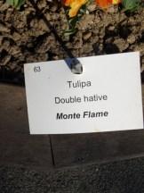 Tulipe-Mania (185)