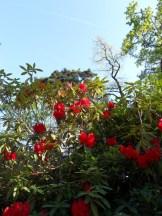 Tulipe-Mania (234)