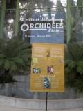 1001 Orchidées .. (2)