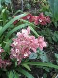 1001 Orchidées .. (21)