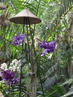 1001 Orchidées .. (26)