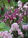 1001 Orchidées .. (36)