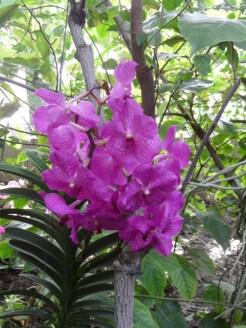 1001 Orchidées .. (39)