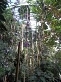 1001 Orchidées .. (48)